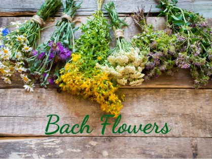 What are Bach Flowers? Individual Qualities and Usage